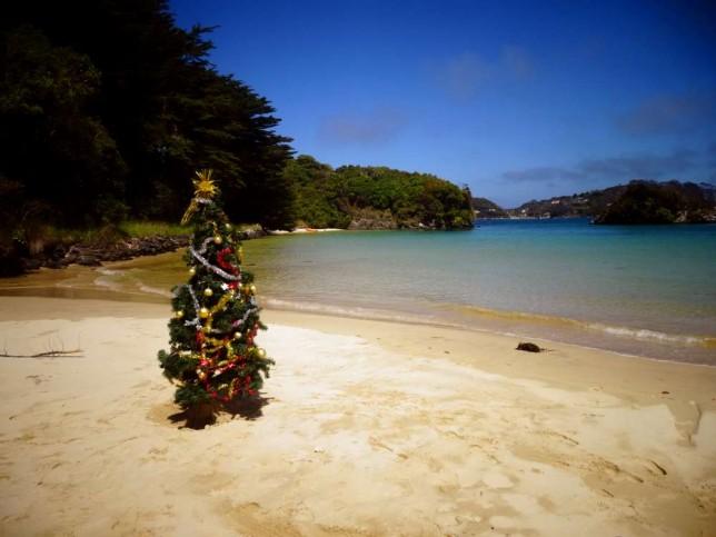 Christmas Tree on Braggs Bay