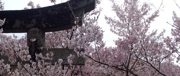 THE PHILOSOPHY BEHIND O HANAMI (お 花見)