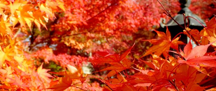 CULTURES SAUVAGES #5: ONE AUTUMN IN KYOTO
